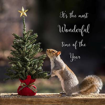 Christmas Squirrels Wall Art - Photograph - Christmas Squirrel Most Wonderful Time Of The Year Square by Terry DeLuco