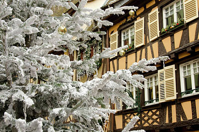 Colmar France Wall Art - Photograph - Christmas Tree In Front Of Typical by Danita Delimont