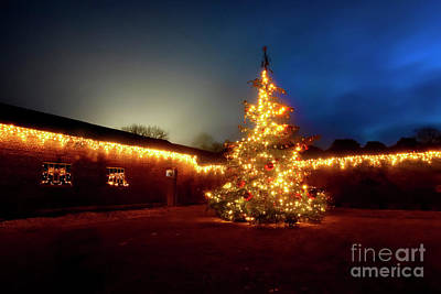 Photograph - Christmas Tree by Terri Waters