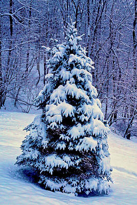 Photograph - Christmas Tree Winter by Meta Gatschenberger
