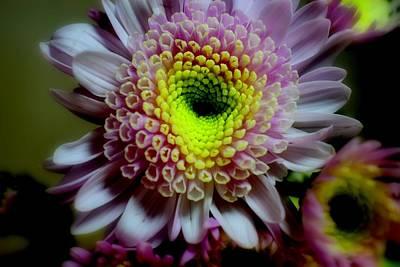 Studio Grafika Patterns - Chrysanthemum #060 by Noranne AG