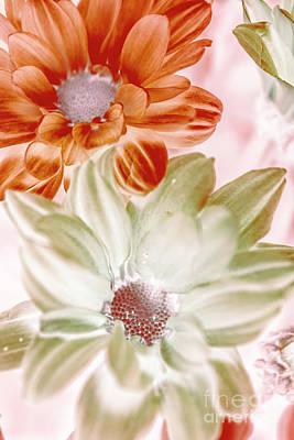 Photograph - Chrysanthemum Creativity by Jorgo Photography - Wall Art Gallery
