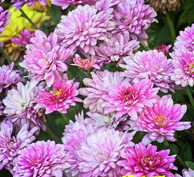 Photograph - Chrysanthemum by Garvin Hunter