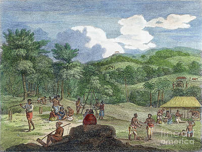 Photograph - Cinnamon Plantation, 1804 by Granger