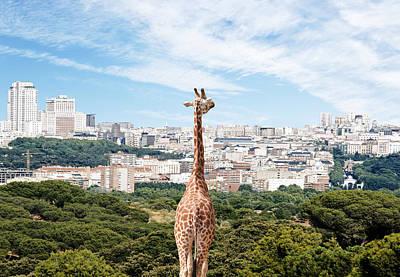 City Giraffe Art Print by Richard Newstead