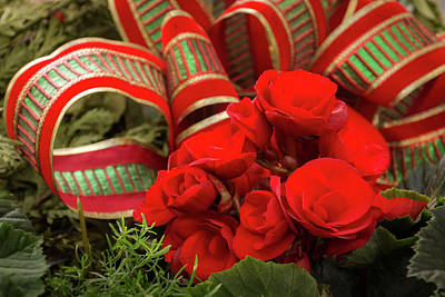 Photograph - Classic Red And Green Christmas - Flowers And Gift Ribbons Decor by Georgia Mizuleva