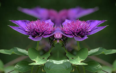 Photograph - Clematis 2 by Buddy Scott