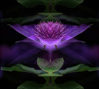 Photograph - Clematis 3 by Buddy Scott