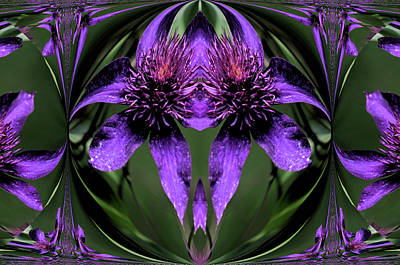 Photograph - Clematis 5 by Buddy Scott