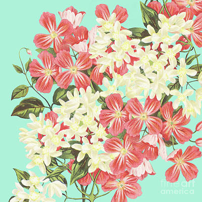 Digital Art - Clematis Floral Pattern by Sharon Mau
