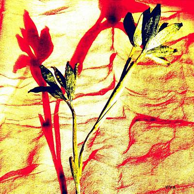 Photograph - Clementine Sprig Contemporary by VIVA Anderson