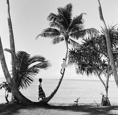 Beach Photograph - Climbing For Coconuts by Three Lions