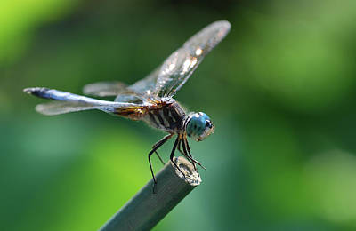 Digital Art - Close Up Dragonfly by Don Wright