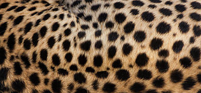 Photograph - Close-up Of Cheetah Spots On The by Mint Images - Art Wolfe