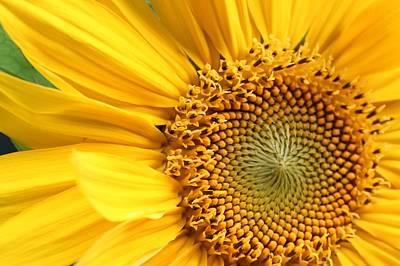 Close-up Of Sunflower Art Print by Andreas Naumann / Eyeem