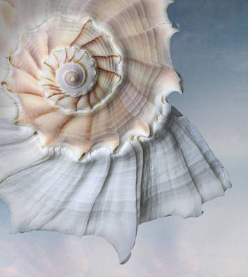 Photograph - Close-up Still Life Of A Shell by Joyce Tenneson