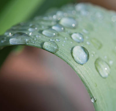 Photograph - Close Up Water Drops On A Plant by Scott Lyons