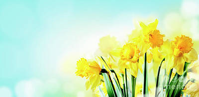 Photograph - Closeup Of Beautiful Spring Daffodil Bunch In Garden With Sunlig by Jelena Jovanovic