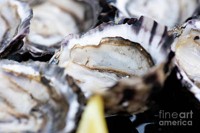 Photograph - Closeup Of Fresh Shucked Oysters. by Rob D
