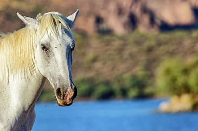 Animals Photos - Closeup White Wild Horse With Lake Background by Good Focused