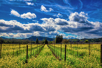 Photograph - Clouds Over Sonoma Vineyards by Garry Gay