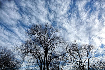 Photograph - Clouds Sky And Trees In Winter by Robert Ullmann
