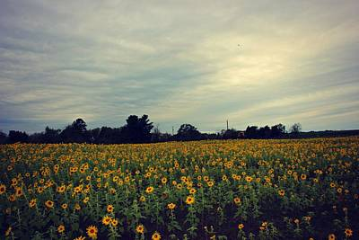 Photograph - Cloudy Sunflowers by Candice Trimble