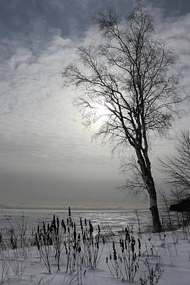 Photograph - Cloudy Tree Silhouette by David T Wilkinson