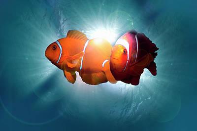 Photograph - Clownfish by Georgette Douwma