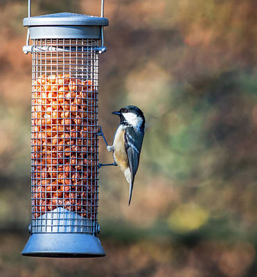 Photograph - Coal Tit On A Bird Feeder by Scott Lyons