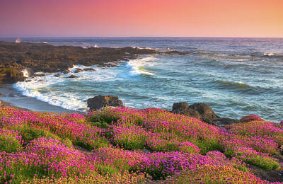 Royalty-Free and Rights-Managed Images - Coastal Clover Sunset by Darren White