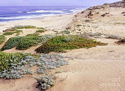 Photograph - Coastal Dunes by Scott Kemper