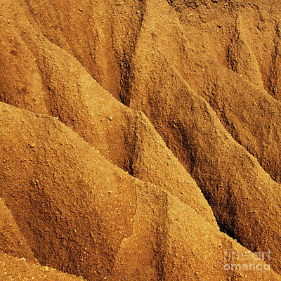 Photograph - Coastal Erosion - Organic Patterns And Textures by Charmian Vistaunet