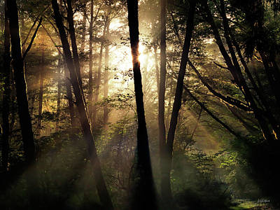 Photograph - Coastal Forest Light by Leland D Howard