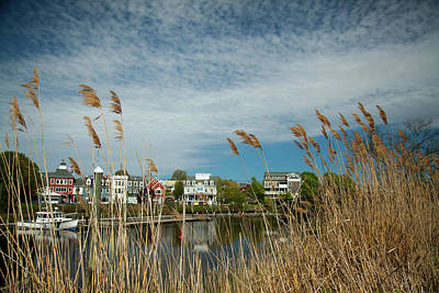Photograph - Coastal Spring by Karol Livote