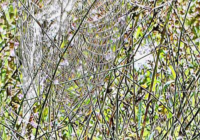Photograph - Cobweb Study 5 by Dorothy Berry-Lound
