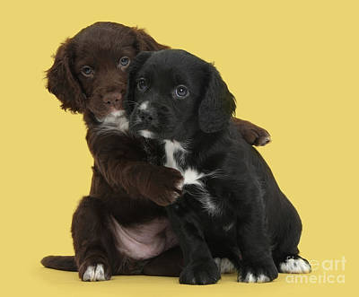 Photograph - Cocker Cuddles by Warren Photographic
