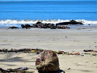 Photograph - Coconut Beach by Joan Stratton