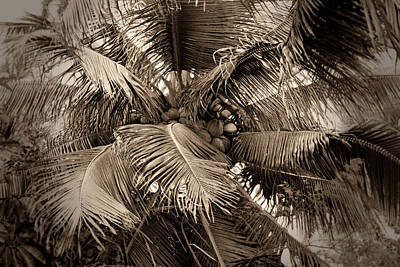 Photograph - Coconut Palm Abstract by Nadalyn Larsen