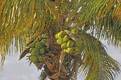 Photograph - Coconut Palm by HH Photography of Florida