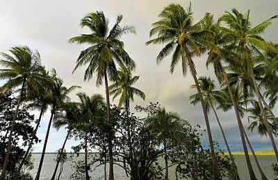 Photograph - Coconut Palms Rocky Point by Joan Stratton