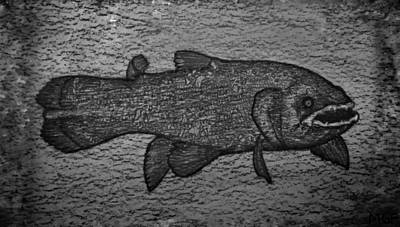 Animals Drawings - Coelacanth Portrait  by Michael Panno