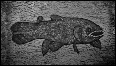 Animals Drawings - Coelacanth Portrait W/ Border by Michael Panno