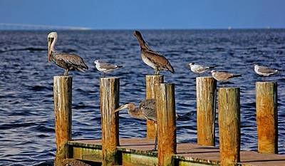 Photograph - Coexisting by HH Photography of Florida
