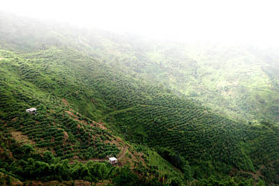 Photograph - Coffee Plantation In Jamaica by © Rick Elkins