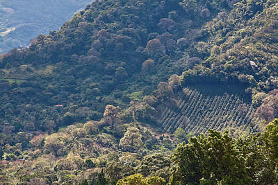 Photograph - Coffee Plantation In Panama by Tatiana Travelways