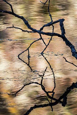 Photograph - Coffenbury Reflections by Robert Potts