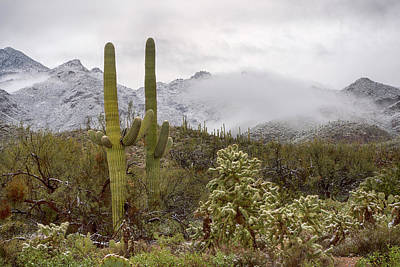 Photograph - Cold Desert Winter In Arizona by Dave Dilli