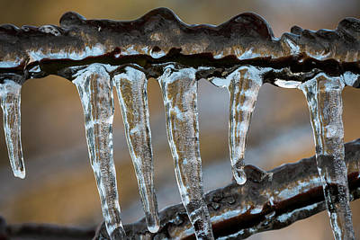 Photograph - Cold Snap Icicles by Robert Potts