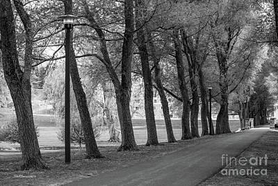 Photograph - Colgate University Oak Drive by University Icons